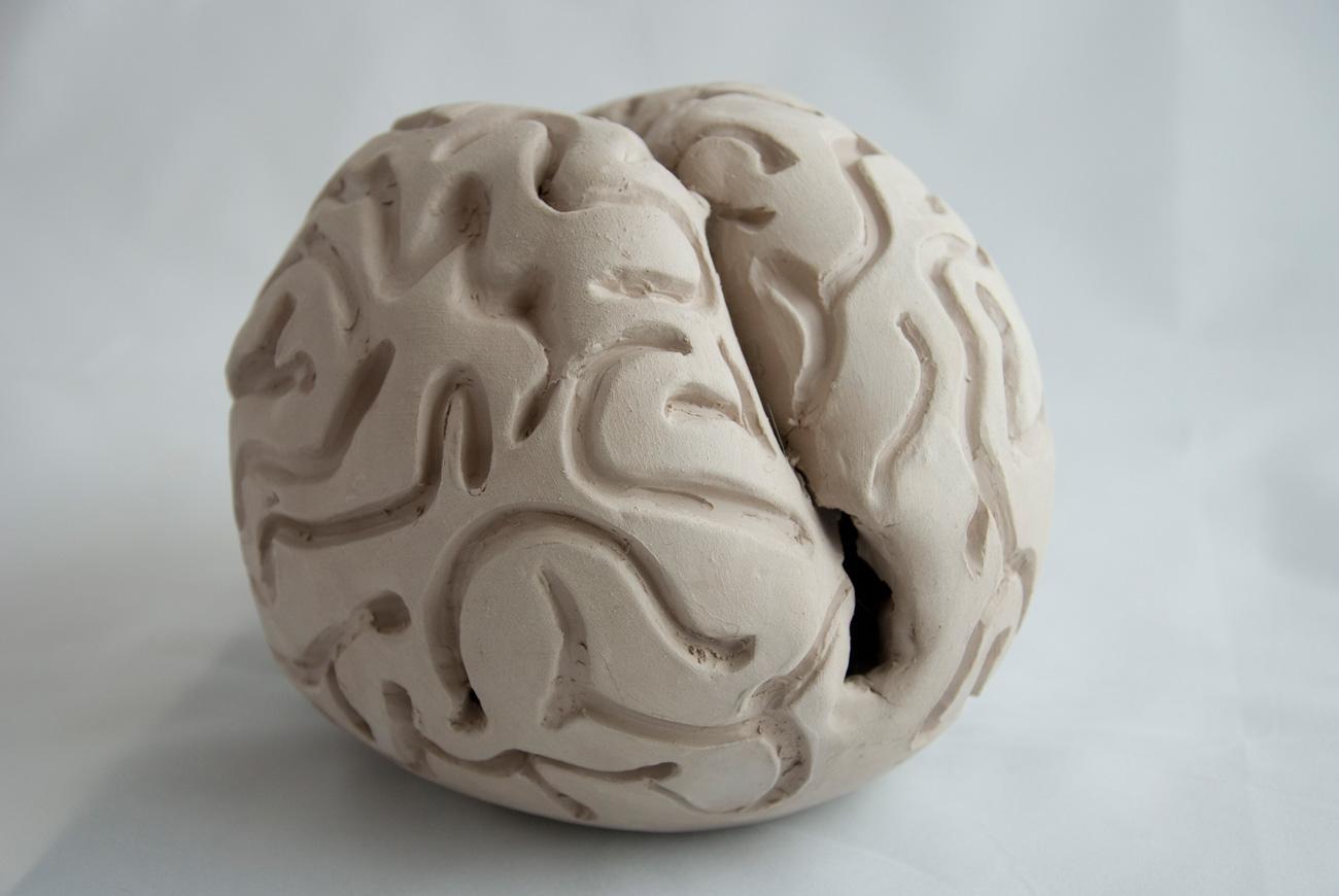 brain-1-DSC_0679