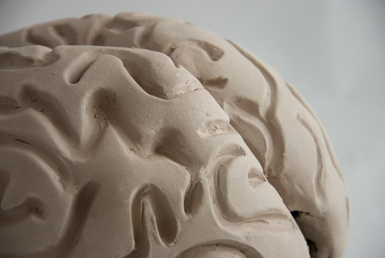 brain-4-DSC_0666